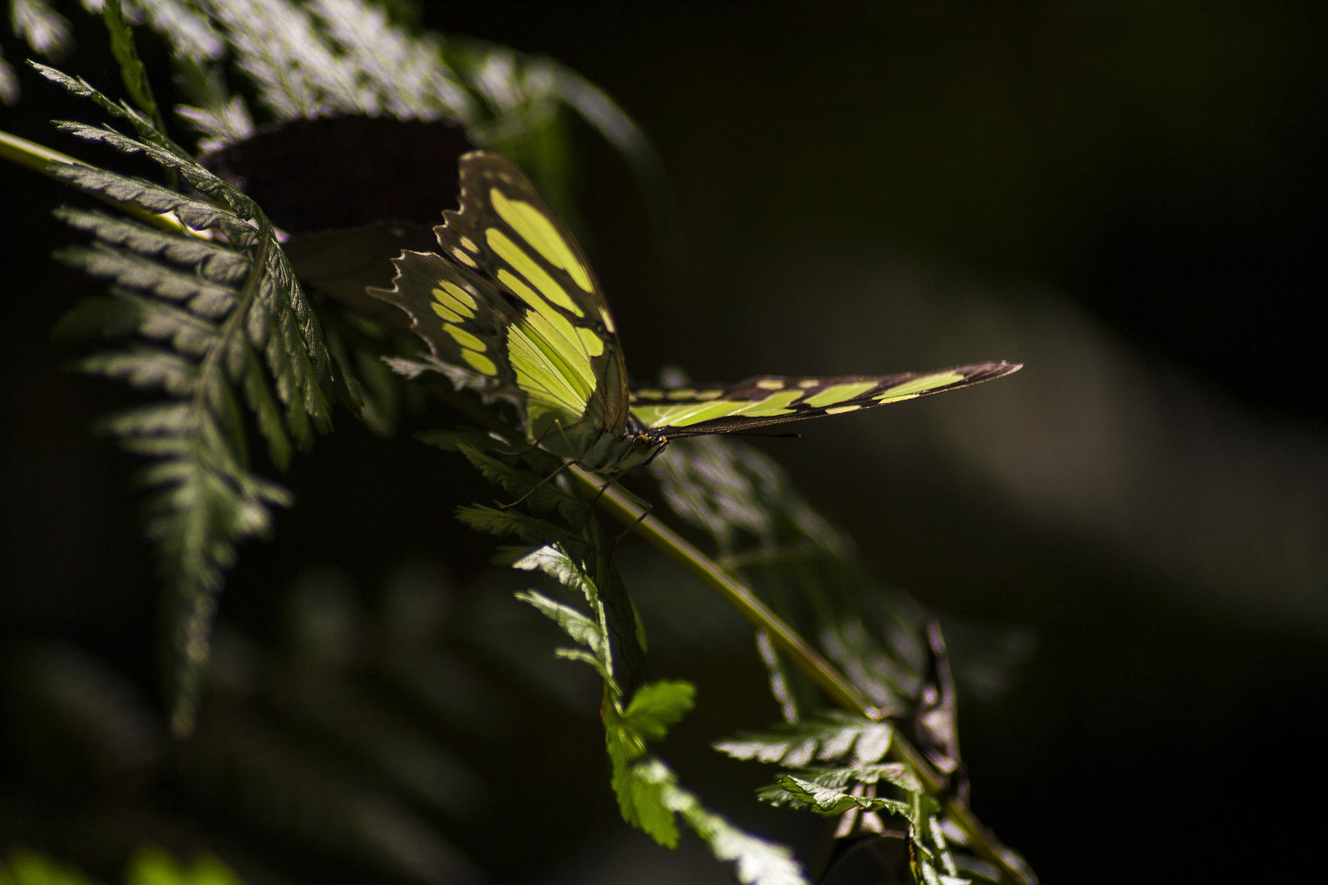 GYCAF butterfly-4301168_1920